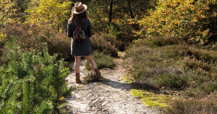 De Teut in Zonhoven: het grootste heidegebied van Midden-Limburg