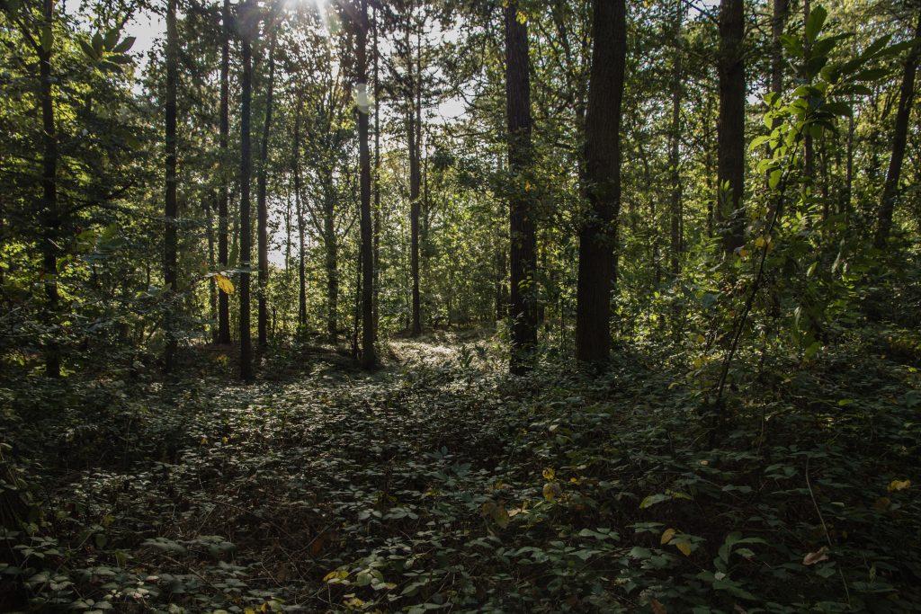 Bos, provinciaal domein Nieuwenhoven.