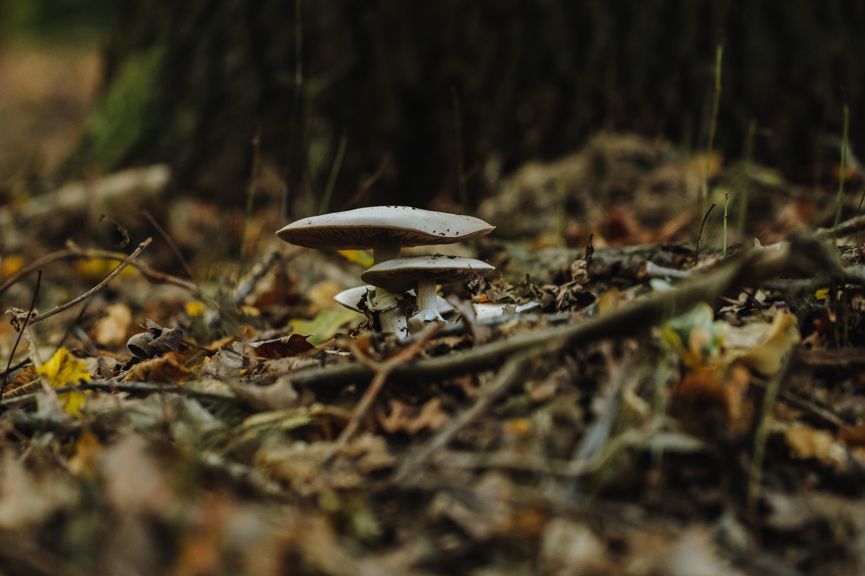Nieuwenhoven bos: dit jaar zijn er enorm veel paddenstoelen!