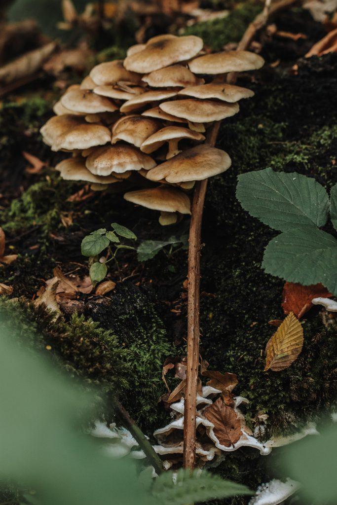 Paddestoelen in Nieuwenhoven bos, oktober.