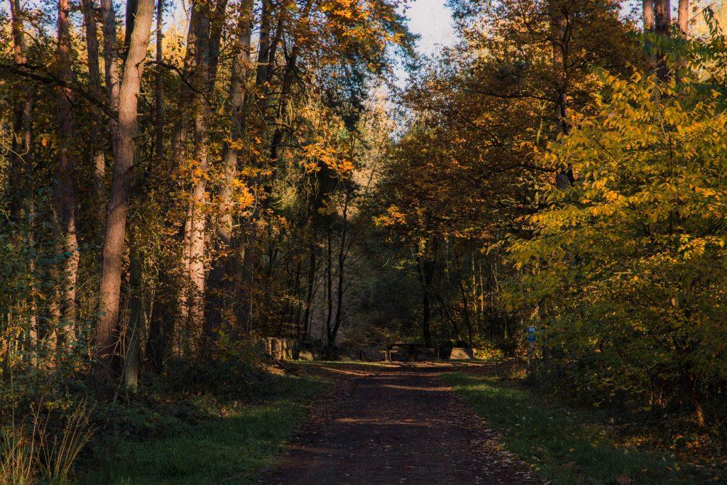 Herfst in november in Limburg, België.