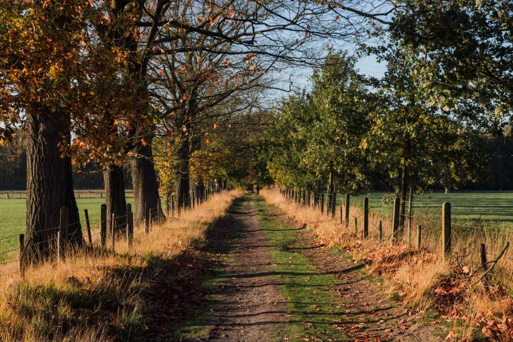Munsterbos blauwe route van 5km.